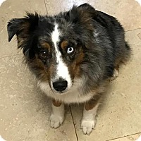 Adopt A Pet :: Brisbane D3444 - Shakopee, MN