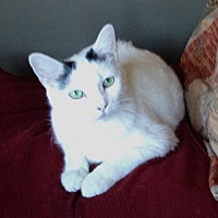 Adopt A Pet :: Mable - Los Angeles, CA