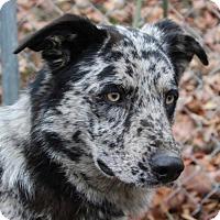 Adopt A Pet :: Willie - Hagerstown, MD