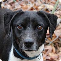 Adopt A Pet :: Titana - Washington, DC