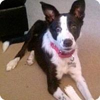 Adopt A Pet :: Kira - Bellevue, NE