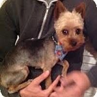 Adopt A Pet :: Jack Peppermint - Austin, TX