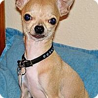 Adopt A Pet :: HUEY - AUSTIN, TX
