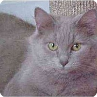 Adopt A Pet :: Sydney - Portland, OR