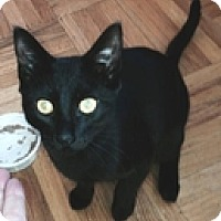 Adopt A Pet :: Sparta - Vancouver, BC