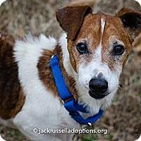 Adopt A Pet :: Ernie - Conyers, GA
