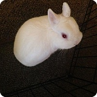Adopt A Pet :: Wynter - Maple Shade, NJ