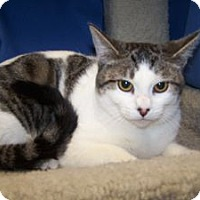 Adopt A Pet :: K-Gail2-Tatiana - Colorado Springs, CO