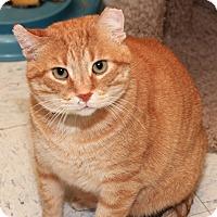 Adopt A Pet :: Carlton - St. Charles, MO