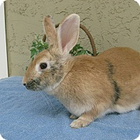 Adopt A Pet :: Eve - Bonita, CA