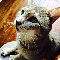 Adopt A Pet :: Hobo - Trevose, PA