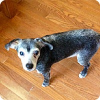 Adopt A Pet :: Onyx - Philadelphia, PA