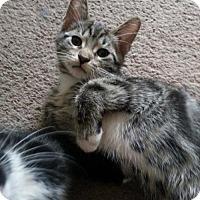 Adopt A Pet :: zz 'Kalif' courtesy listing - Cincinnati, OH