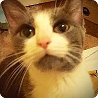 Adopt A Pet :: Debbie - Xenia, OH