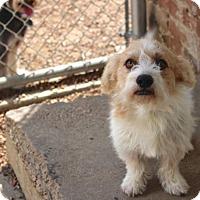 Adopt A Pet :: Campbell - Norwalk, CT