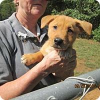 Adopt A Pet :: Cha-Cha - Williston Park, NY