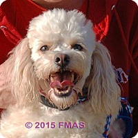 Adopt A Pet :: Sticker 0172/VSP Canine-Inmate Training Program - Madera, CA