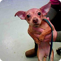 Adopt A Pet :: BAKER - Conroe, TX