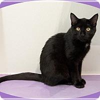 Adopt A Pet :: Tyrion - Mt. Prospect, IL