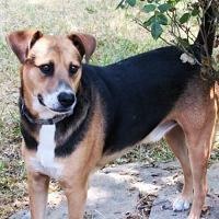 Adopt A Pet :: Chico - Whitewright, TX