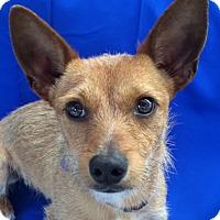 Adopt A Pet :: Nino - San Francisco, CA