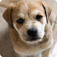 Adopt A Pet :: Rockin - Round Lake Beach, IL