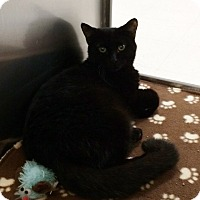 Adopt A Pet :: Ebony - Byron Center, MI