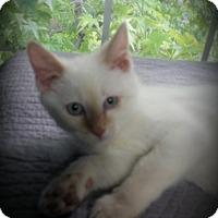 Adopt A Pet :: Leow - Fairborn, OH