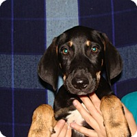 Adopt A Pet :: Sammy - Oviedo, FL