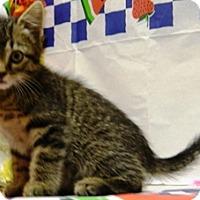 Adopt A Pet :: Quincy - Columbus, NE