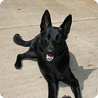 Adopt A Pet :: Maximus - Greensboro, NC