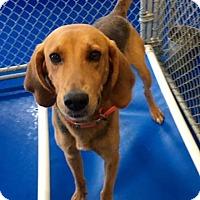 Adopt A Pet :: Eli - New Kent, VA