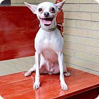 Adopt A Pet :: Mishka - Munster, IN