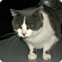 Adopt A Pet :: Paula - Flint, MI
