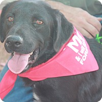 Border Collie Mix Puppy for adoption in Breaux Bridge, Louisiana - Nellie