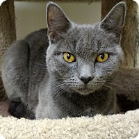 Adopt A Pet :: MissKitty - Carlisle, PA