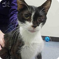 Adopt A Pet :: ALEX - Maumee, OH