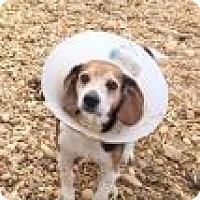Adopt A Pet :: Arwen 2470 - Columbus, GA