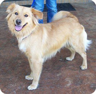 Leah | Adopted Dog | Huntsville, AL | Golden Retriever ...