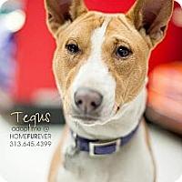 Adopt A Pet :: Tagus - Detroit, MI