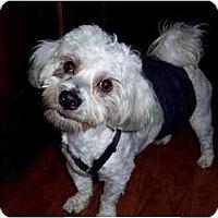 Adopt A Pet :: Barney - Dayton, OH