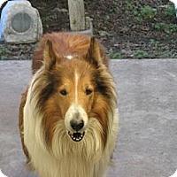 Adopt A Pet :: Brutus - Riverside, CA