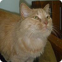 Adopt A Pet :: Wilma - Hamburg, NY