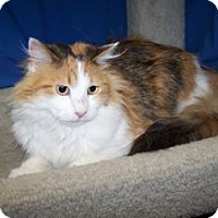 Adopt A Pet :: Prada - Colorado Springs, CO