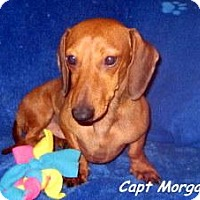 Adopt A Pet :: Morgan - Chandler, AZ