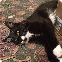 Adopt A Pet :: Jett - Walnut, IA