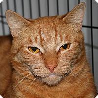 Adopt A Pet :: Peyton - North Branford, CT