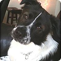 Adopt A Pet :: Buddy - Johnson City, TX