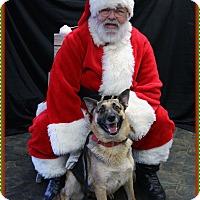 Adopt A Pet :: Gretchen - Rockwall, TX