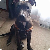 Adopt A Pet :: Reese - Villa Park, IL
